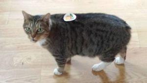 cat voter